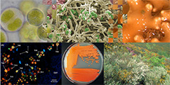 SYMBIOSIS DIVERSITY AND EVOLUTION OF LICHENS AND PLANTS: