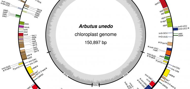 Secuenciación del genoma de los cloroplastos de <i>Arbutus unedo</i> (madroño). The genome chloroplasts sequencing of <i>Arbutus unedo</i> (strawberry tree).